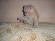 Кремовый котик ищет себе новый дом